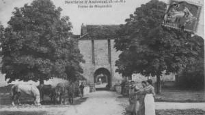 andrezel (2)